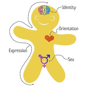 genderbread person