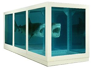 hirst shark side
