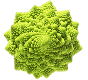 romanesco broccoli fractal