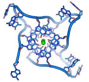 parallel telomere quadruple