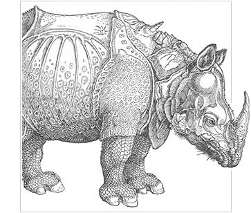 durers rhino