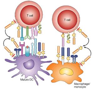 antigen-presenting cells