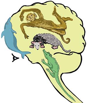 quadrune brain