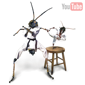 insect fighting