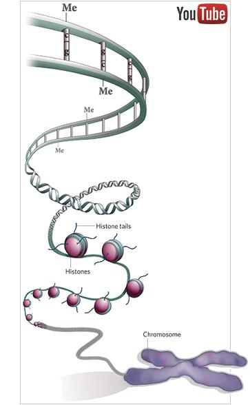 epigenome