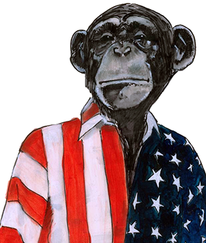 American Chimp by Nathaniel Gold