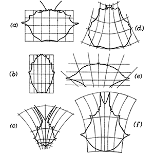Cartesian transformations of crabs by DW Thompson